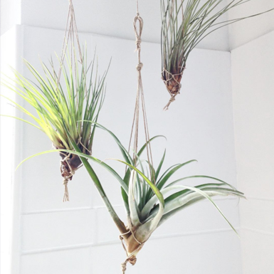 Mandarina Duck loves: Airplants